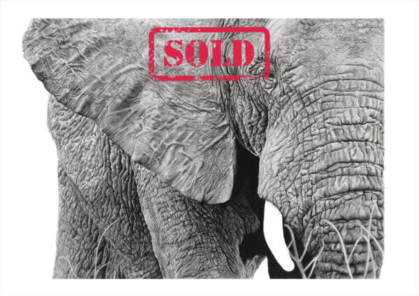 Graphite and Charcoal Artwork | Wildlife Wall Art| Elephant drawing