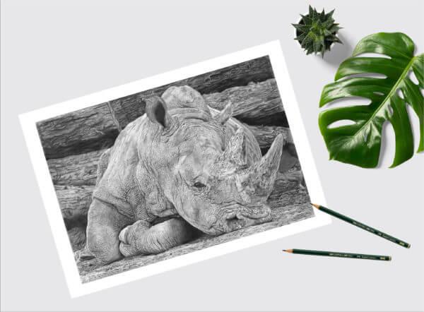 Rhino pencil drawing print