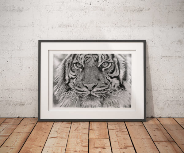 Black and white tiger art print