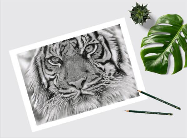 Tiger wildlife art print  Original wildlife art