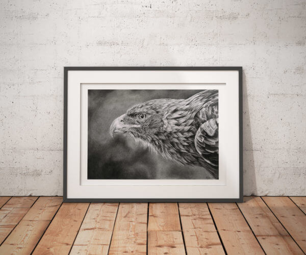 Eagle art print | Hand drawn bird illustration | Bird of prey
