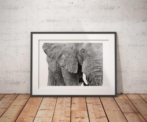 African Elephant wildlife art drawing | Elephant Art print
