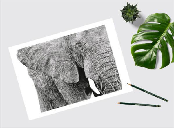 Black and white elephant drawing | elephant art print