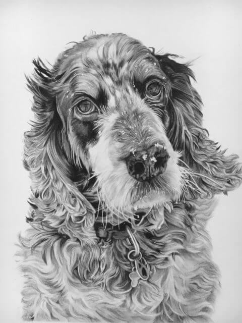 Archie | Dog Portrait | Pet Portrait