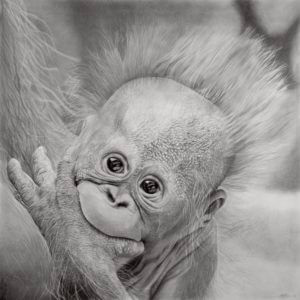 Hope | Baby Orangutan Drawing | Orangutan Fundraiser Art Print