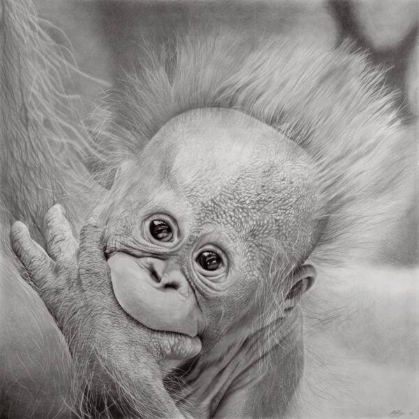 Hope | Baby Orangutan Drawing | Orangutan Fundraiser Art Print