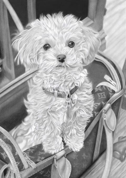 Bex The Maltipoo | Pet Portrait