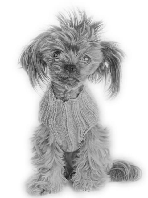 Bullet | Dog Portrait | Pet Portrait