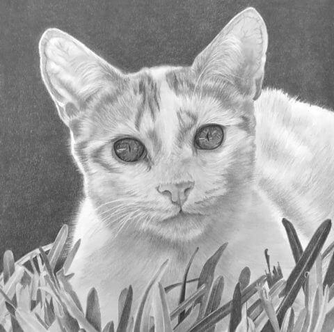 Charlie | Pet Portrait | Cat Portrait