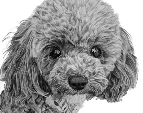 Chiffon | Pet Portrait | Dog Portrait