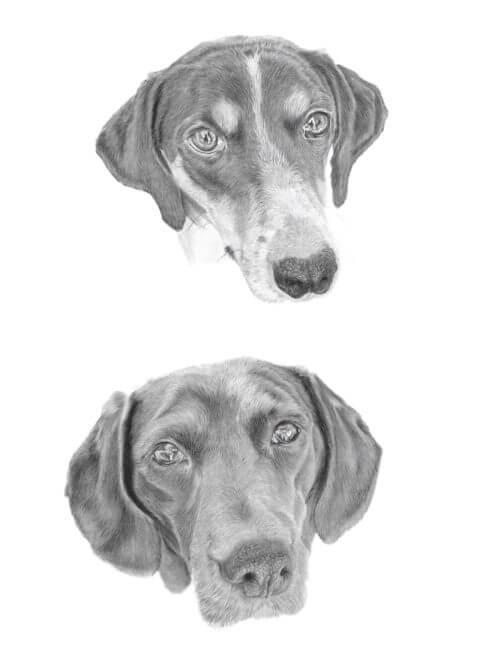 Danae and Kassie | Dog portrait | Pet Portrait