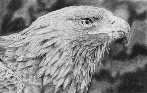 'Sharp' | Eagle Artwork | Original Wildlife Art