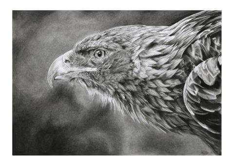 'Focus' | Eagle Artwork | Original Wildlife Art