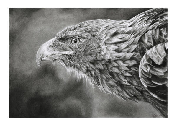 'Focus' | Eagle Artwork | Original Wildlife Art