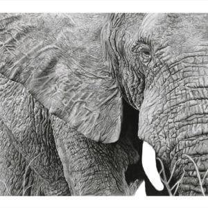 'Close Up' | Elephant Art Print | Original Wildlife Art