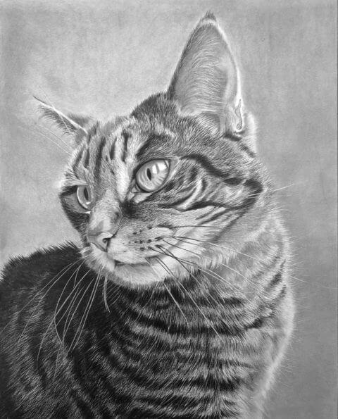 Elsa | Cat Portrait | Pet Portrait