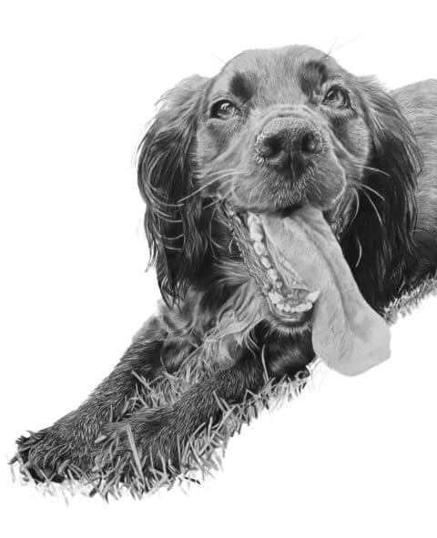 Ezzy | Dog Portrait| Pet Portrait
