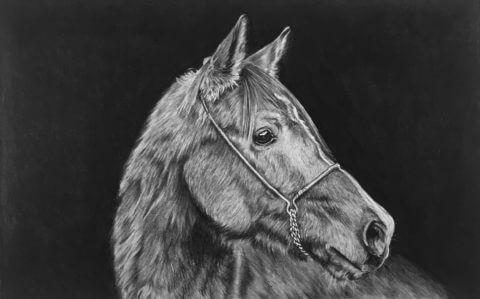 Ed | Horse portrait
