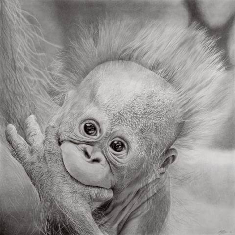 'Hope' | Orangutang Artwork | Original Wildlife Art