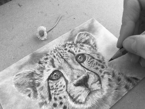 Cheetah Graphite Postcard art