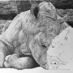 Wildlife Artist of the Year Finalist
