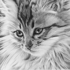 Cat portrait | Kitten picture | Pet portrait artist