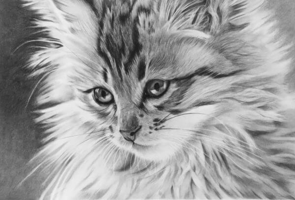 Cat portrait | Kitten picture | Pet portrait artist