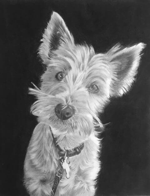 Lily | Westie Portrait | Pet Portrait