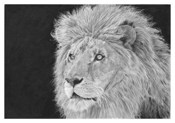 'Proud' | Lion Artwork | Original Wildlife Art