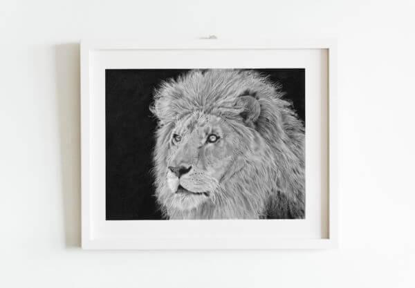 African lion hand drawn sketch. Wildlife artwork