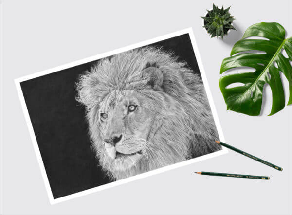 Lion wildlife art sketch| Lion wall picture