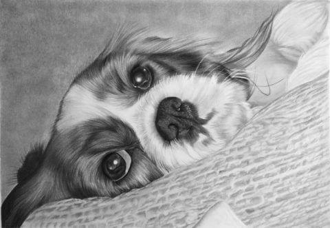 Maisie | King Charles Spaniel Portrait | Pet portrait