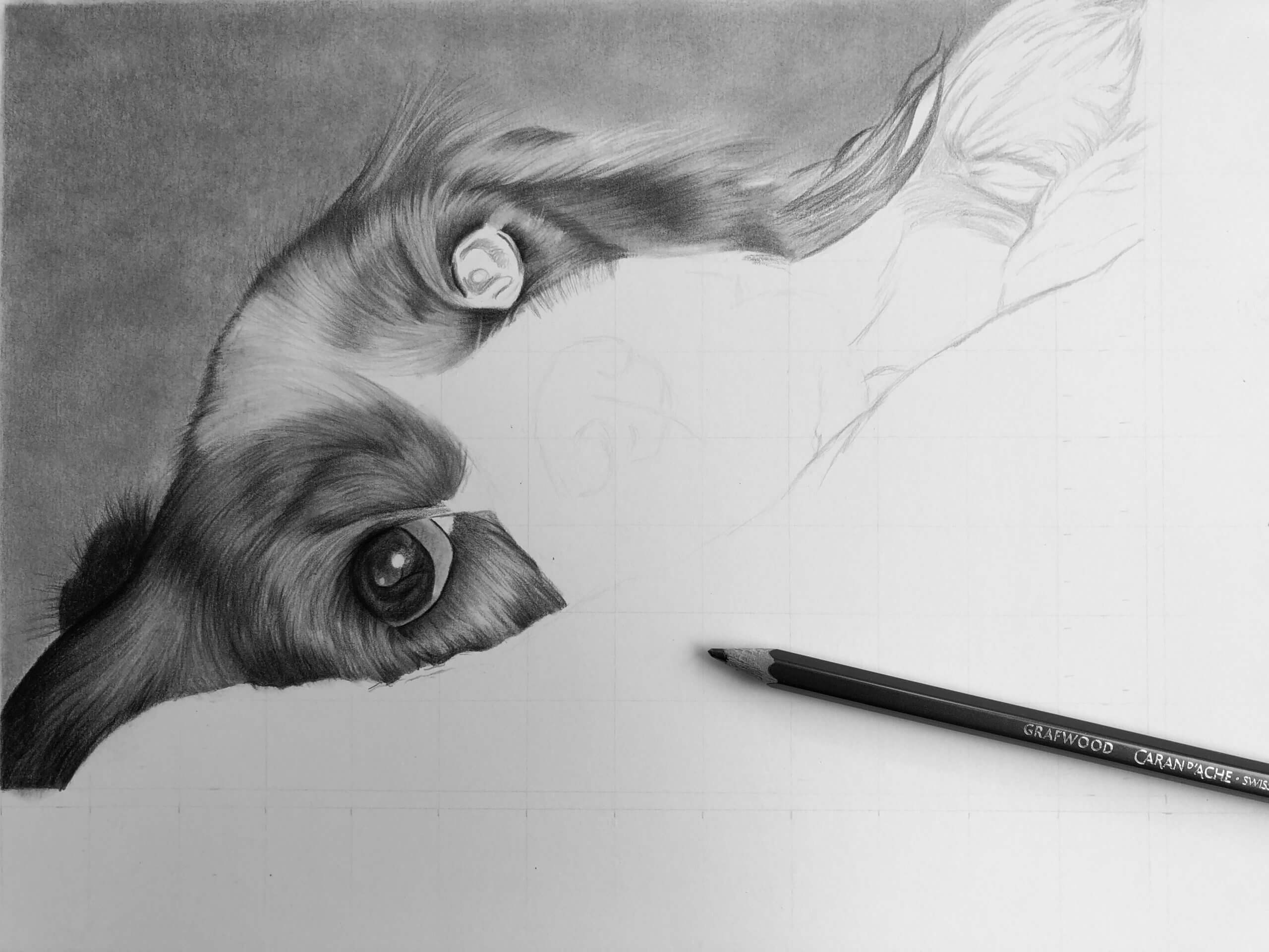Drawing pet portraits