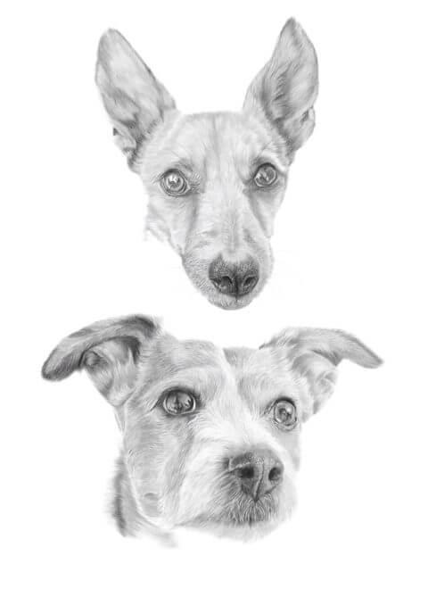 Milo and Jess | Dog portrait | Pet Portrait