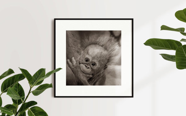 Baby orangutan artwork | Wildlife artwork