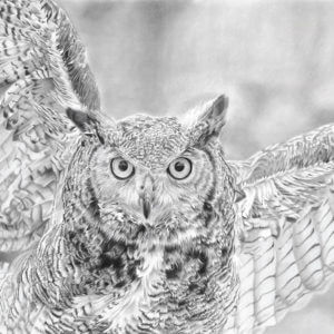 'Hunter' | Owl Artwork | Original Wildlife Art