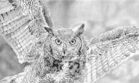 'Hunter' | Owl Artwork | Original Wildlife Art