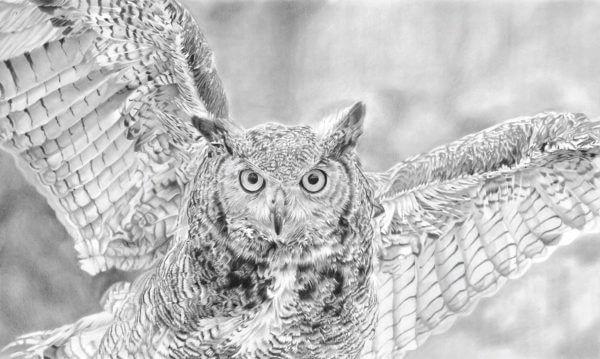 'Hunter'   Owl Artwork   Original Wildlife Art