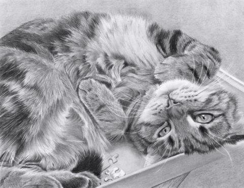 Pippin | Cat Portrait | Pet Portrait