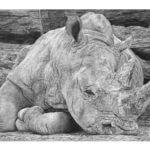 'Heavy Sleeper'   Rhino Artwork   Original Wildlife Art