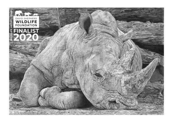 DSWF Wildlife Artist of the Year Finalist