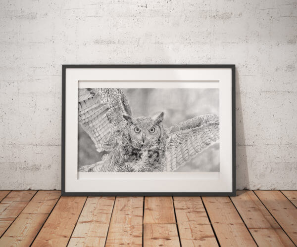 Black and white owl print | Bird picture