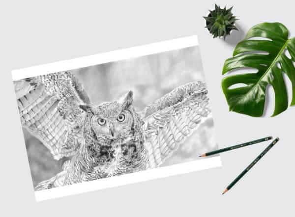 Owl sketch in graphite | Bird Art Print