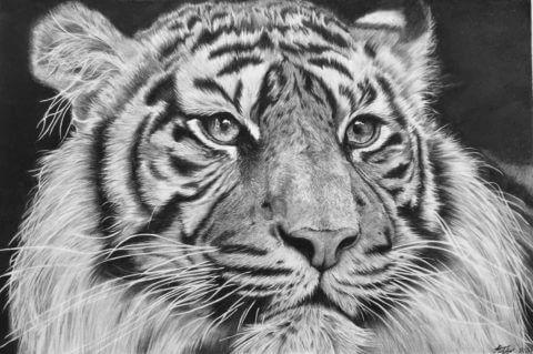 'Elegance' | TigerArtwork | Original Wildlife Art