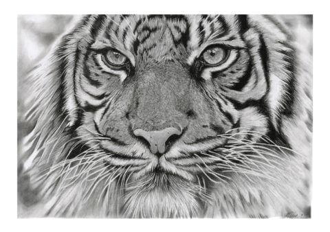 'Intention' | Tiger Artwork | Original Wildlife Art