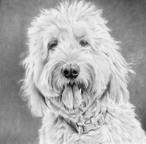 Violeta | Pet portrait