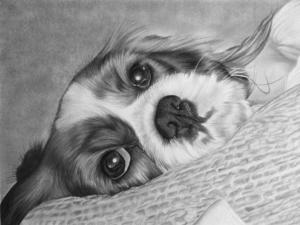 Pet portrait artist | Dog Portrait