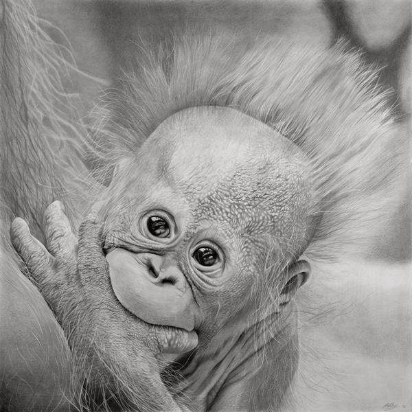 Original Wildlife Animal Art