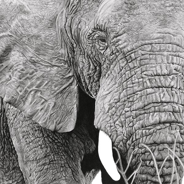 Wildlife Animal Art Prints