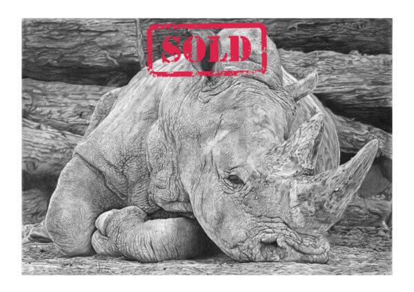 DSWF Wildlife Artist of the Year Finalist Rhino